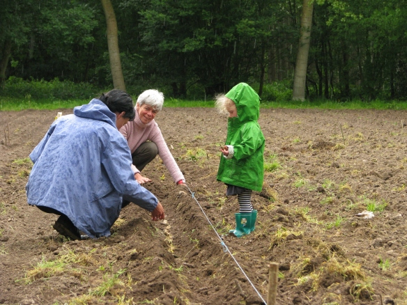 Planting potatoes with Beatrice and Bernard