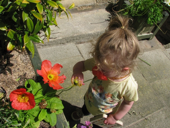 She is really burying her nose into that flower!